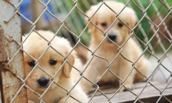 Matemáticas y bricolaje: haz una casa para tu cachorro